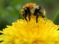 Je svetový deň alergií, nádcha trápi ľudí hlavne na východe