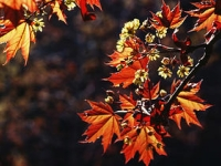 Zdravie v jeseni