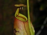 Veda aezoterika sa prelínajú - Rastlinní upíri