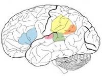 Čo ukrýva mozog. Typy človeka