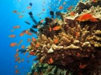 Za Veľkou koralovou bariérou objavili podmorský útes