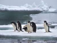 Pri Antarktíde vznikne najväčší morský park na svete