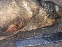 Neznámy muž zastrelil voľne sa pohybujúceho vlčiaka