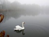Na Slovensku potvrdili ďalšie ohnisko vtáčej chrípky