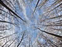 Strom sa zrútil vo vetre, zabil ženu pred očami jej detí