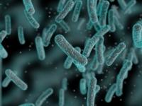 Vedci našli v jaskyniach mikróby staré 50-tisíc rokov
