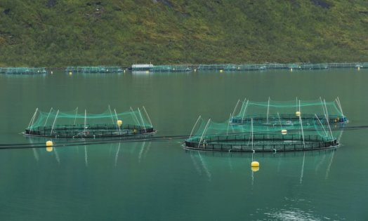 rsz_fish_farming_in_torskefjorden_senja_troms_norway_2014_august_1024x617